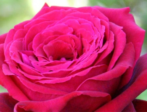 "Conscious Design Hosts ""The Way of the Rose"" Workshop Series with Sandy Humby"